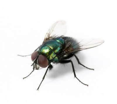 De beste elektrische vliegenvanger methoden tegen vliegen, muggen, wespen, steekvliegen, fruitvliegjes..