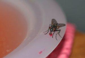 Elektrische Vliegenvallen voor Restaurant: de Perfecte Oplossingen