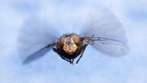 Elektrische Insectenverdelger – zo werkt 't