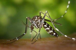 Insectenbestrijding – Muggen, Vliegen en Wespen Doelgericht Bestrijden!
