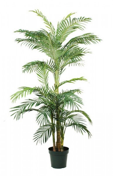 Palm Areca Golden Cane, 190 cm 93933164